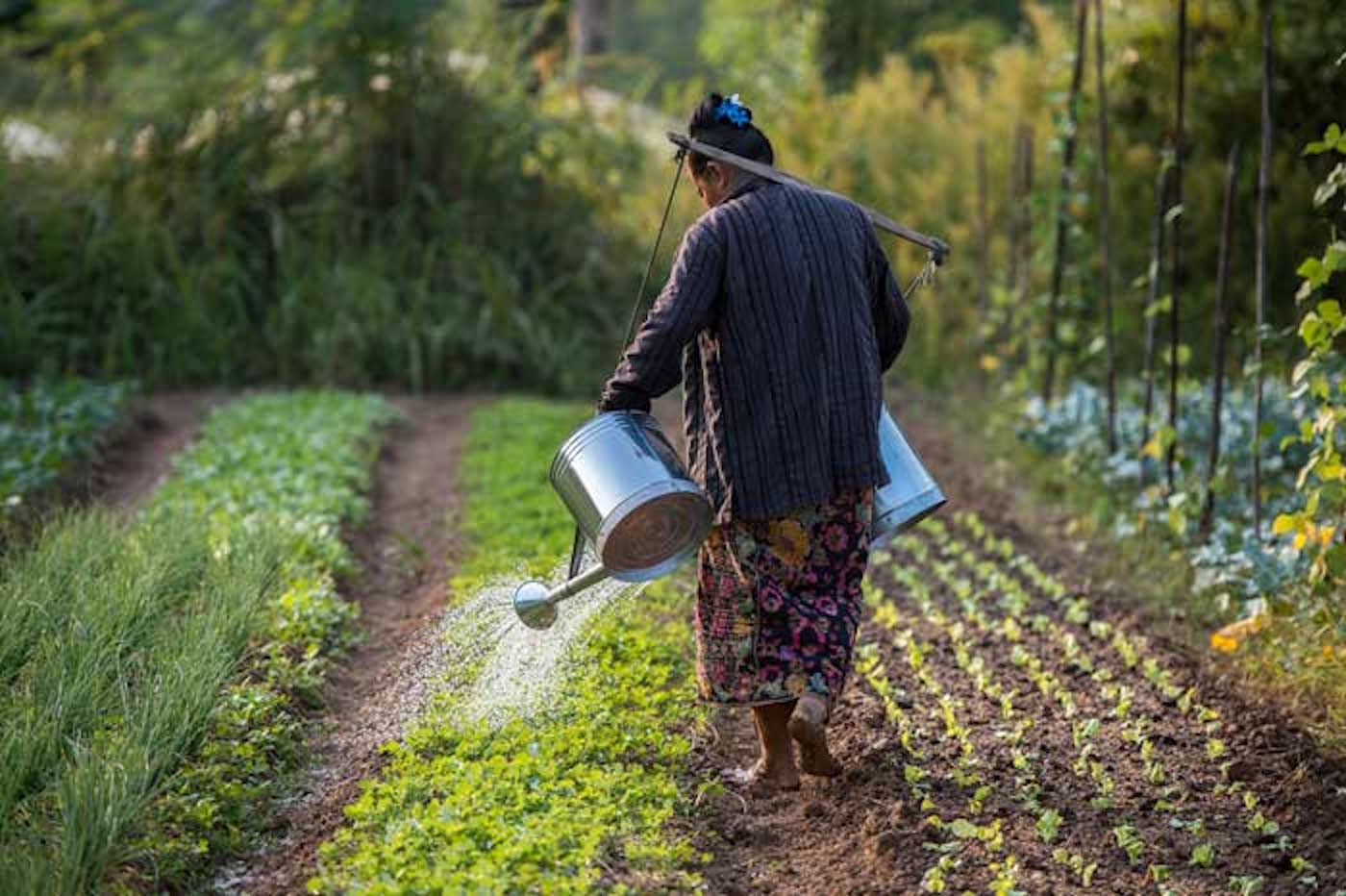 Making Matters Worse: How Climate Change Amplifies Food Insecurity