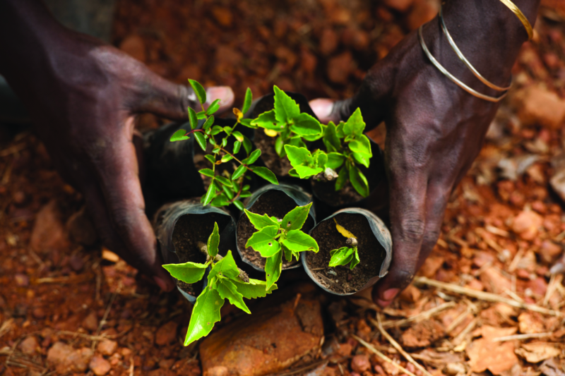 International Forum on Food Security Coordination