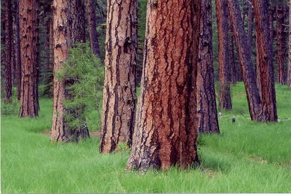 Northern Forest Symposium