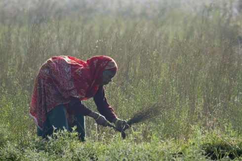 Why Women are Key to Sustainable Development