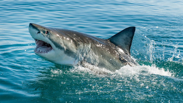 How Shark Attacks Affect Your Vote