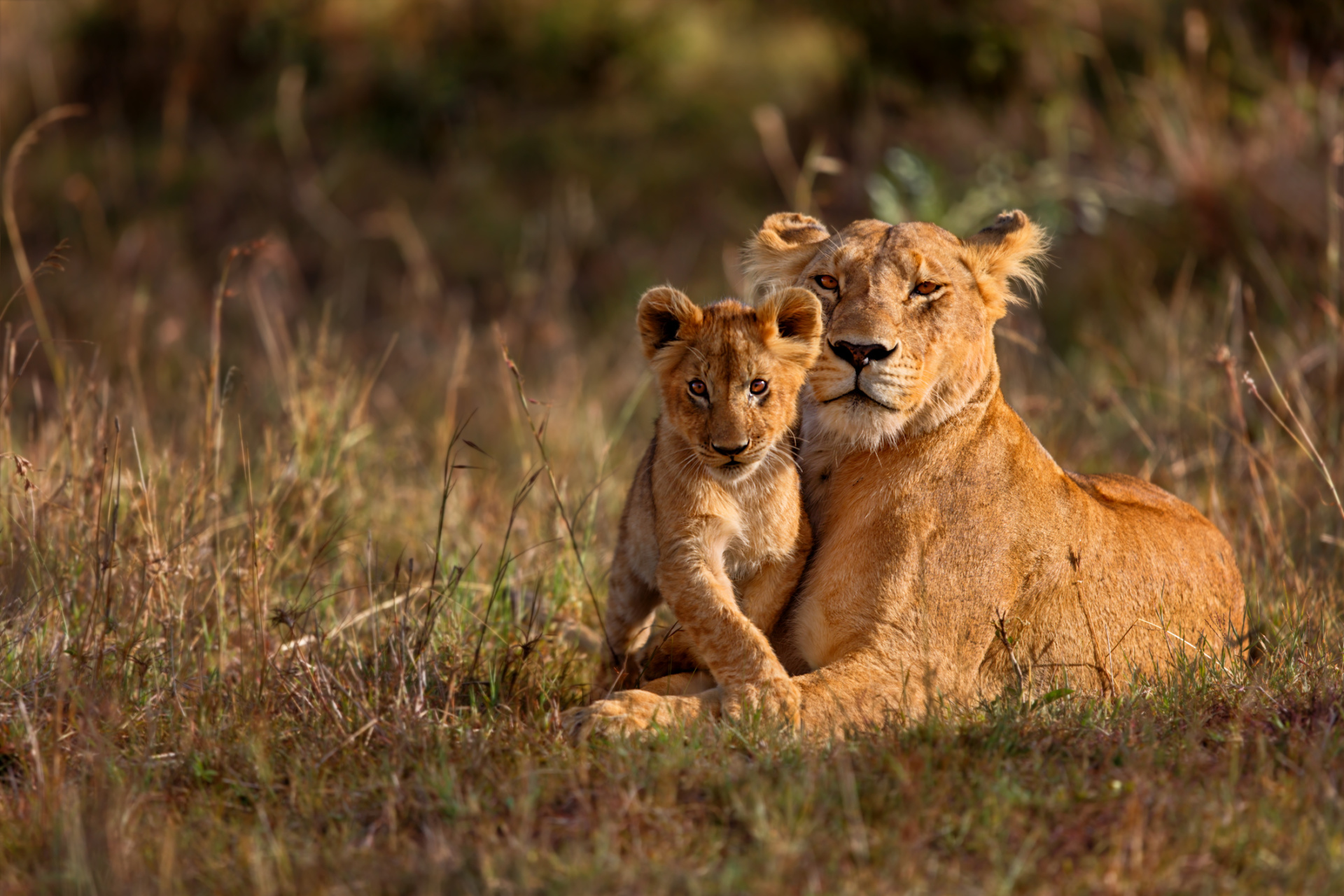 The China-Africa Wildlife Conservation Council