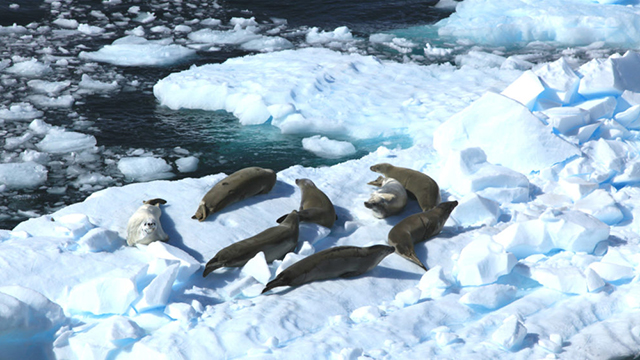 Will China cast its vote for Antartica, and the planet?