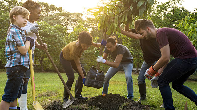 Group of people plant a tree