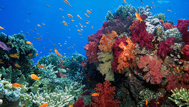 Protecting Biodiversity Supports Global Stability