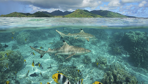 Twenty-three Former Foreign Ministers Call on World Leaders to Protect Biodiversity